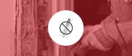 Dedetização – Controle de Cupins