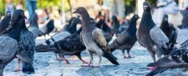 Saiba o que são pragas urbanas e por que ficar atentos com elas